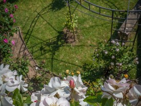 pergolas dans la roseraie