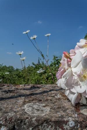 nouvelles photos de la roseraie un soir de Juin