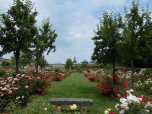Balade dans le parc et la roseraie en ce début juillet