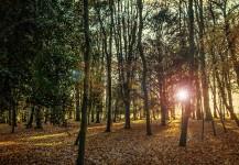parc boisé matin automne