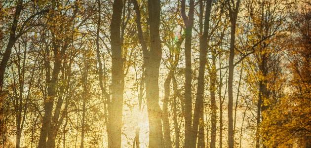 levé de soleil dans le parc