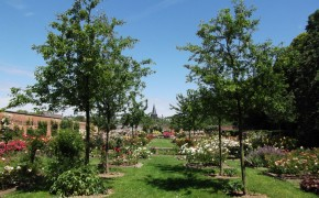 Parc et roseraie de Rambures